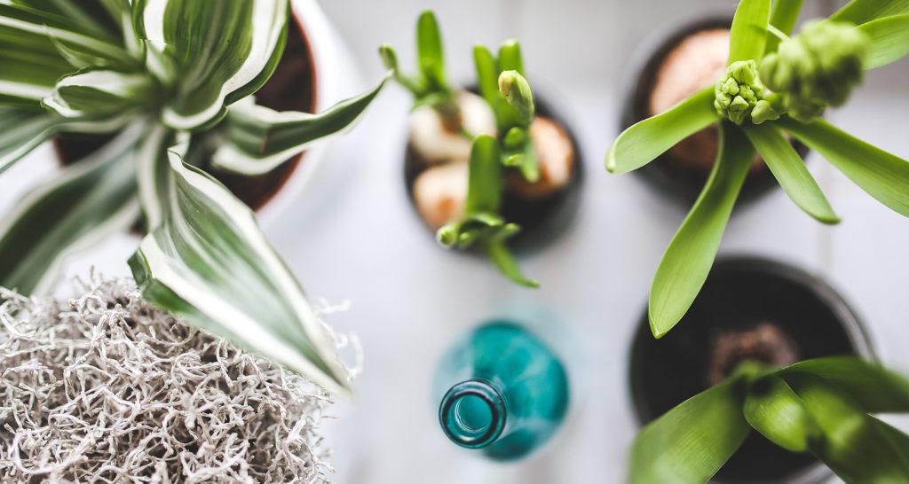 Foto rakt uppifrån på krukväxter och en flaska som står på ett bord.